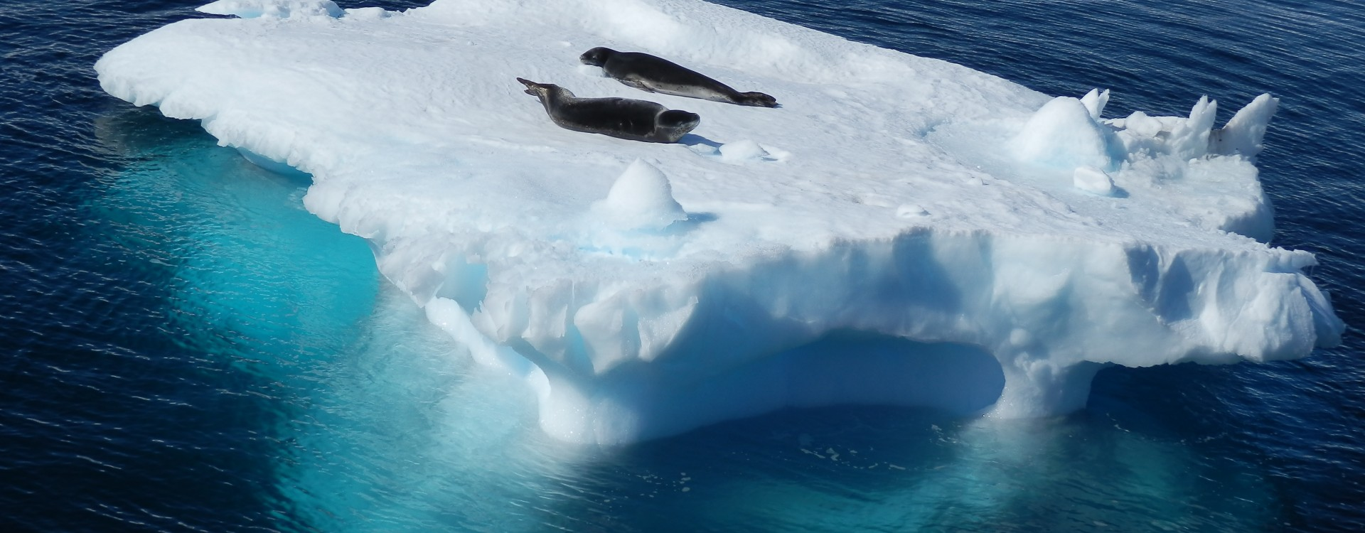 Antarctic Cruise