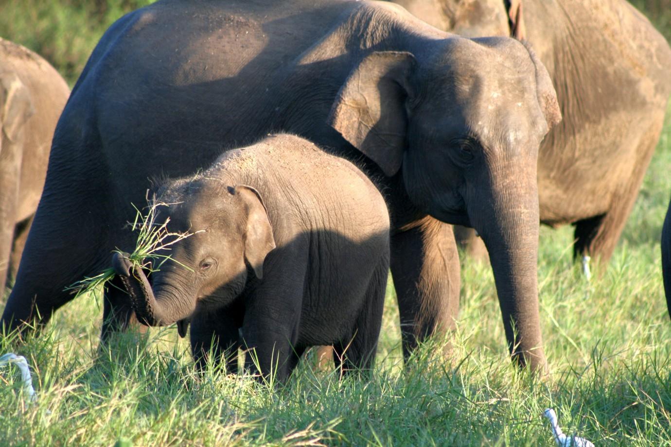 Sri Lanka Family Adventure - KE Adventure Travel