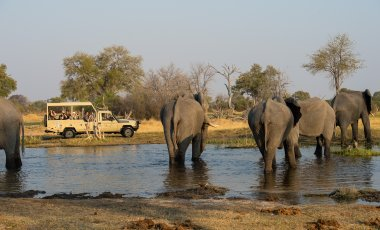 The Great Southern African Safari