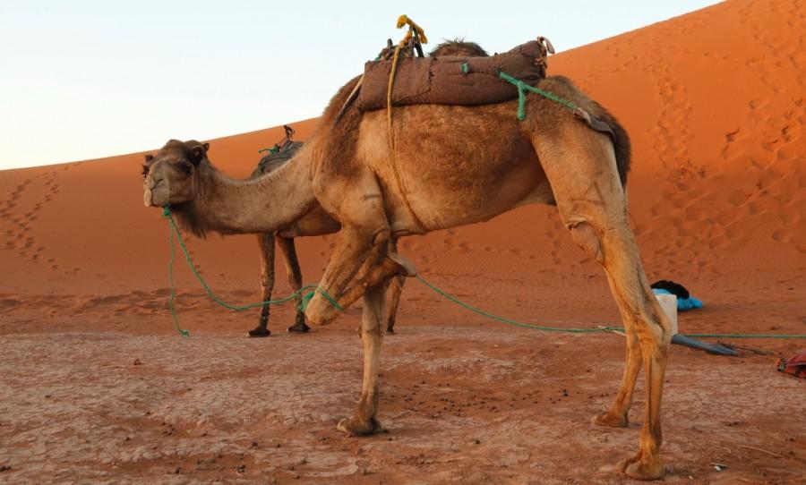 3d283773d5d Edge of the Sahara Trek - KE Adventure Travel