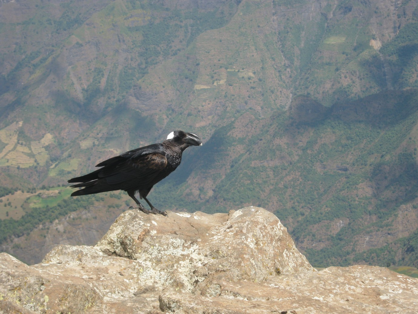 raven chat line Chiltern, night talk chat line Isles of Scilly,